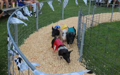 Pig and Duck Races
