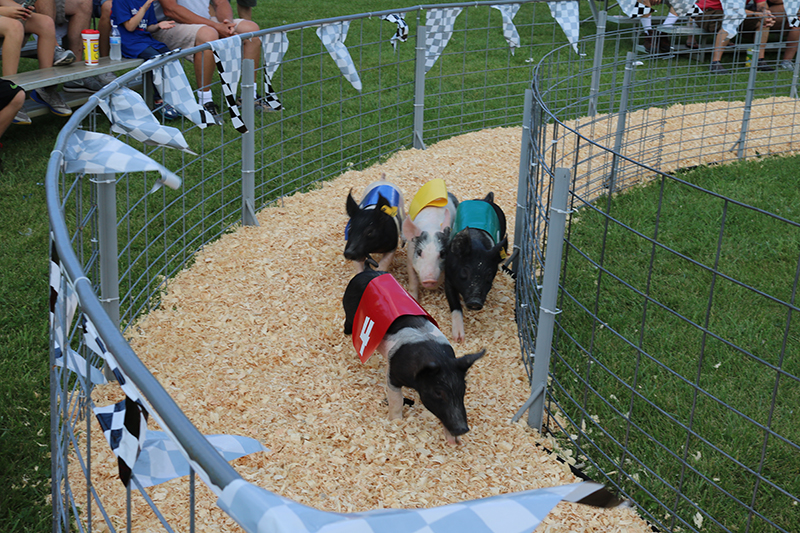 Pleasure Valley Pig and Duck Races